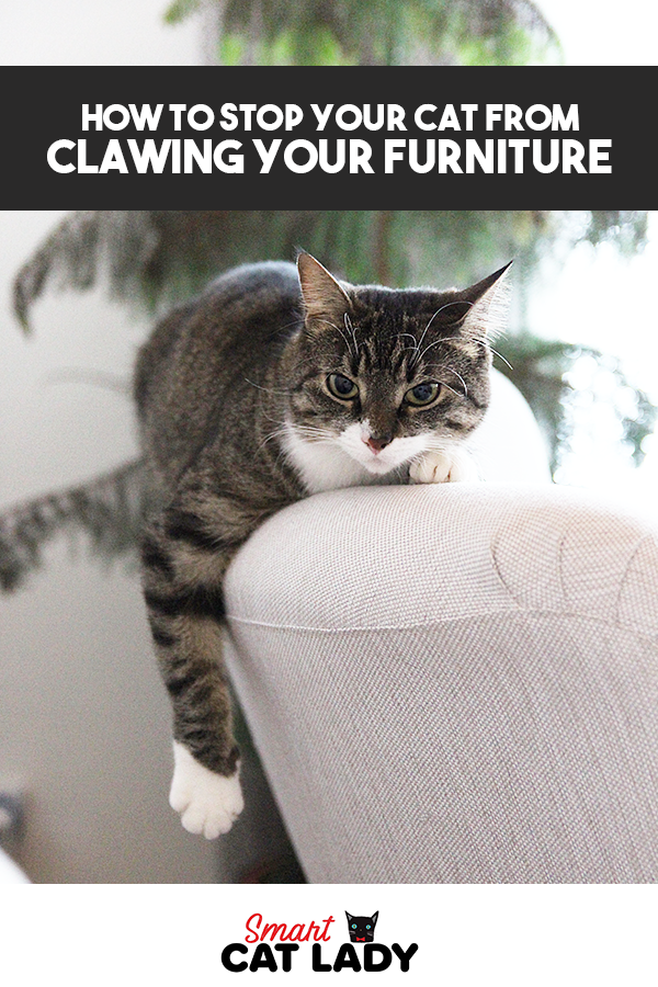 How To Stop Your Cat From Clawing From Furniture In 2020 Cats