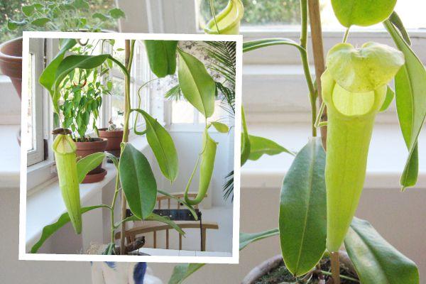 Tropical Heat_Balcony Garden
