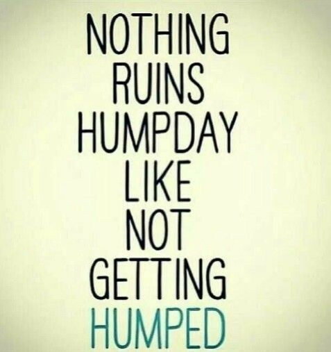 Happy Hump Day Quotes Fascinating Hump Day Images Hump Day Images In 48 Pinterest Humor Funny
