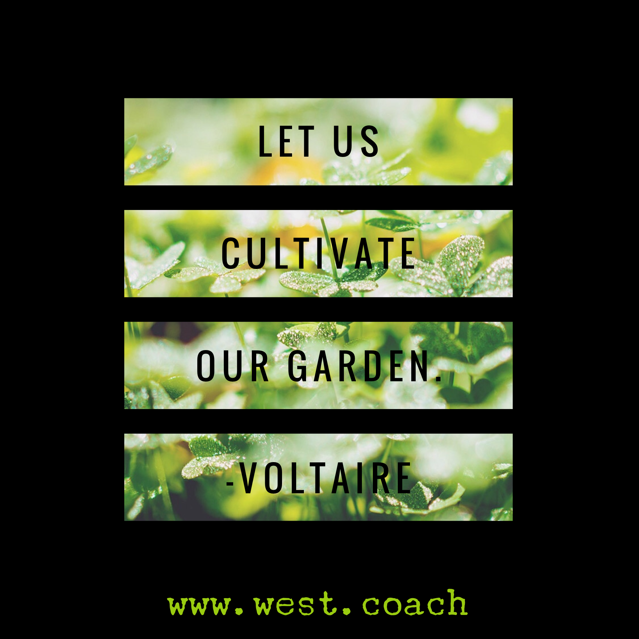 Inspirational Daily Quotes Life Let Us Cultivate Our Garden  Voltaire Eileen West Life Coach
