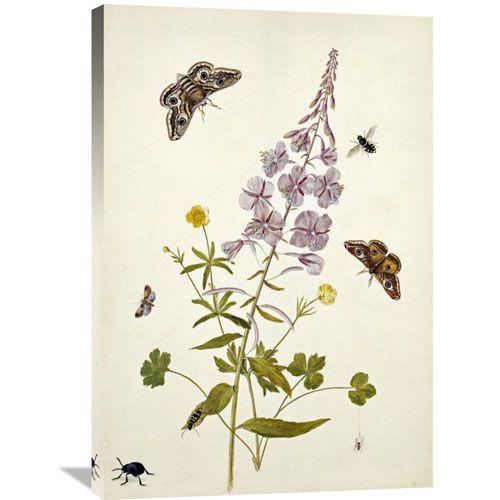 Rosebay Willowherb And Buttercups By Thomas Robins Jr., 24 X 36-Inch Wall Art