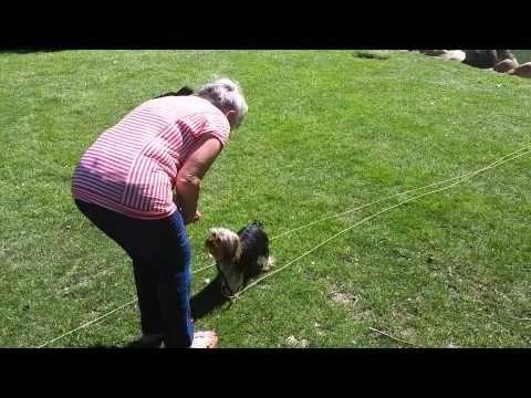 San Jose Dog Obedience Training Small Dog 408 455 1503 Dog
