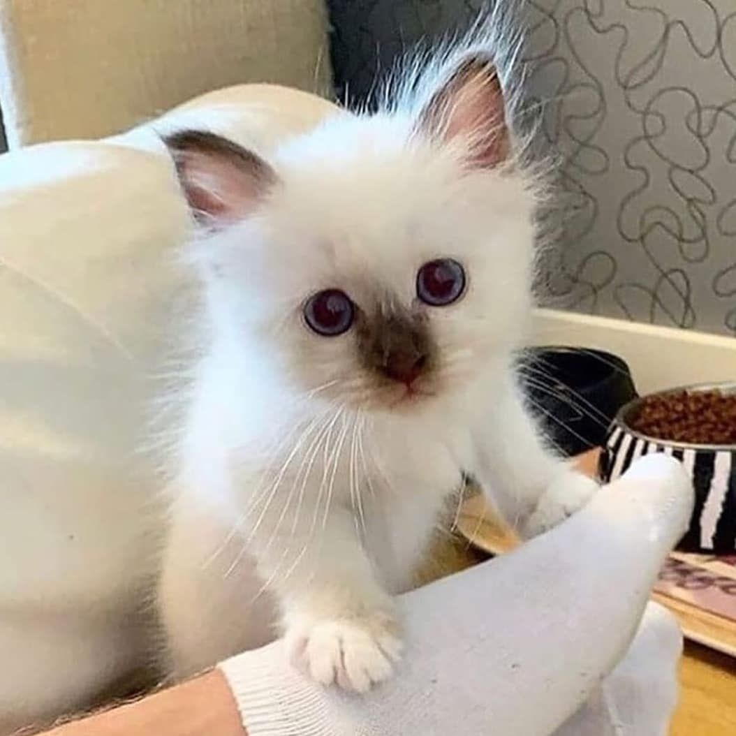 Cat Refuses To Eat After Human Dad Surrendered Him To The Shelter For A New Couch Cute Cats Kittens Cutest Cute Baby Animals