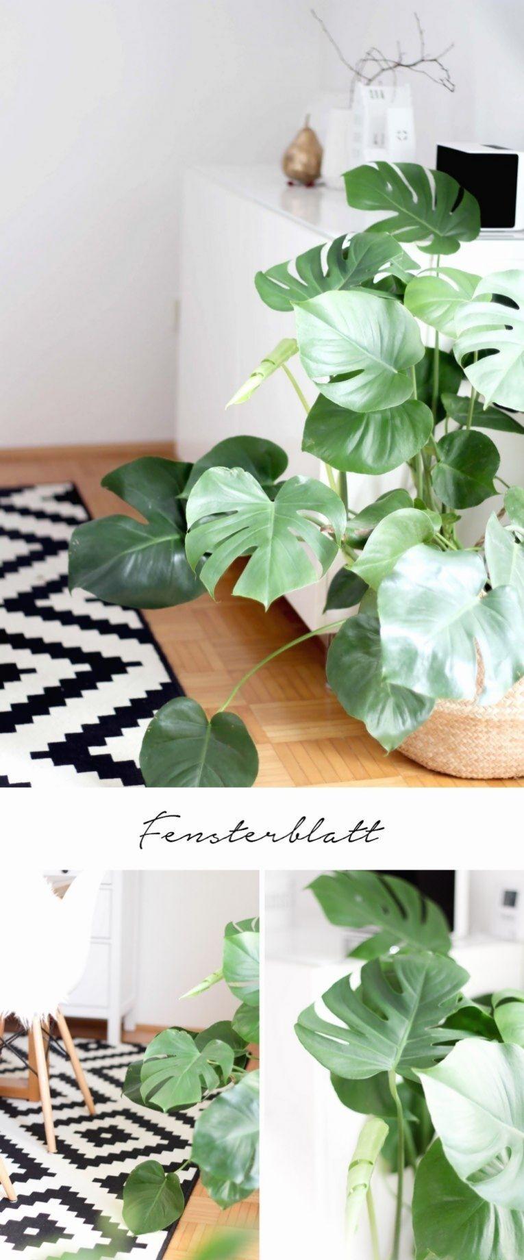 5 Pflegeleichte Zimmerpflanzen Und Meine Neuen Blumentopfe Aus Der Zalando Lounge Provinzkin In 2020 Pflegeleichte Zimmerpflanzen Zimmerpflanzen Zimmerpflanzen Ideen