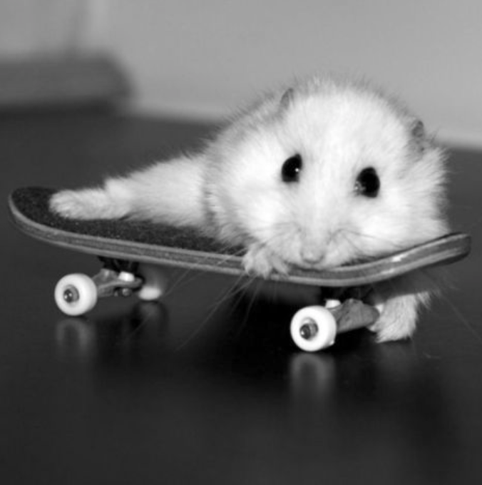 Pin by Wafflez on Ham Funny hamsters, Baby hamster, Cute