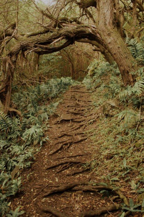 i can remember some of the trees creating root steps in the woods where i…