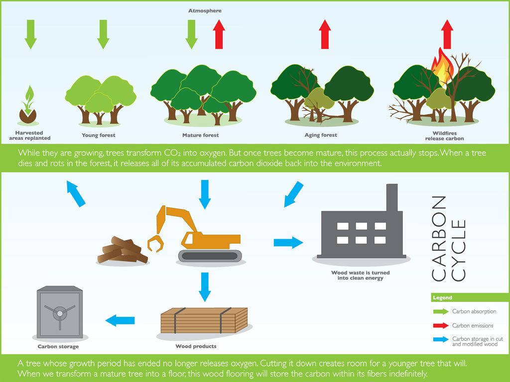 Awesome Discover Wood Flooring Carbon Cycle. Wood Is A Natural Renewable Resource  #carbonepropre #hardwoodflooring