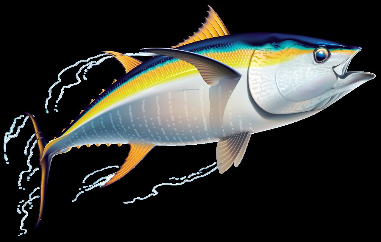 Fish album and craft for Ahi tuna fish