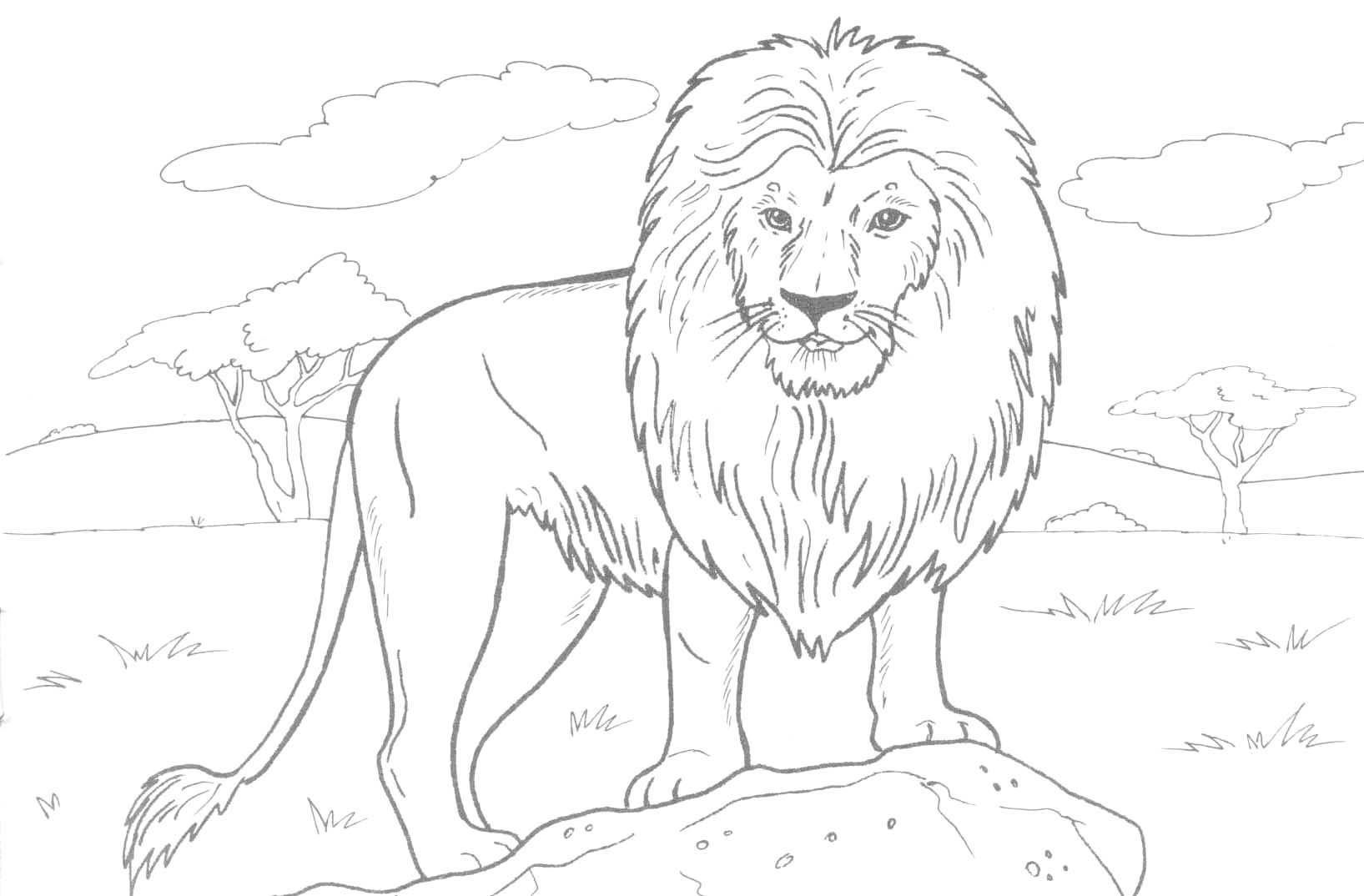 african lion coloring page 01   Animal Chess Board   Pinterest