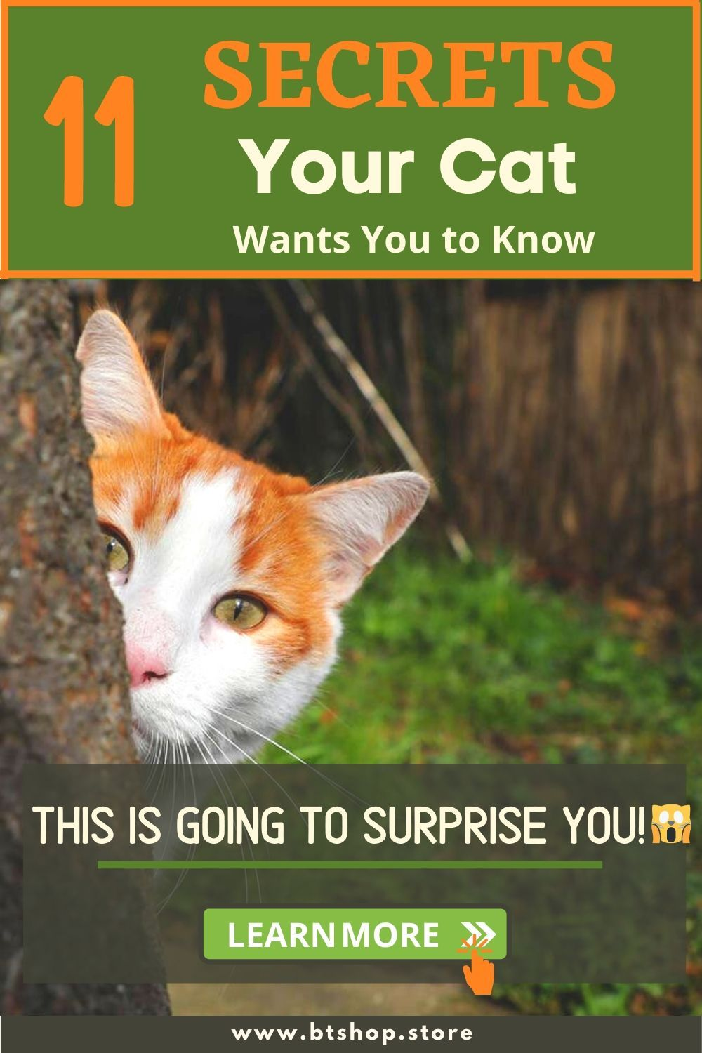 Pin On Fun Facts About Cats