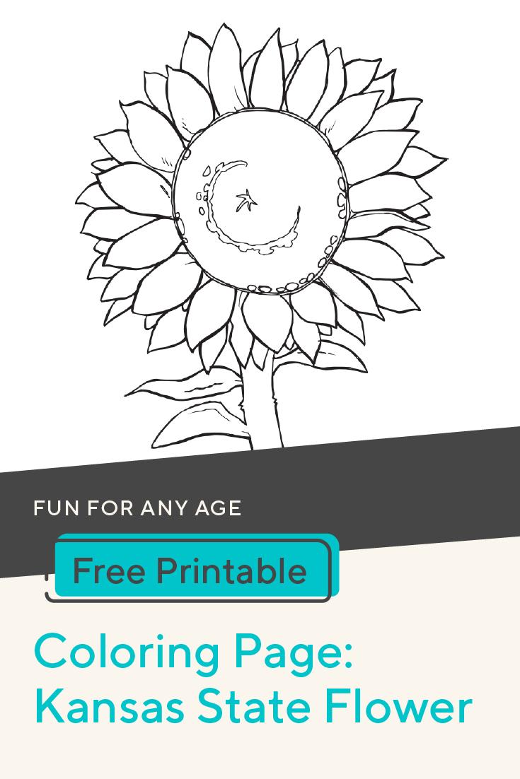 Kansas State Flower Worksheet Education Com Kansas State Flower Kansas State Cool Coloring Pages [ 1102 x 735 Pixel ]