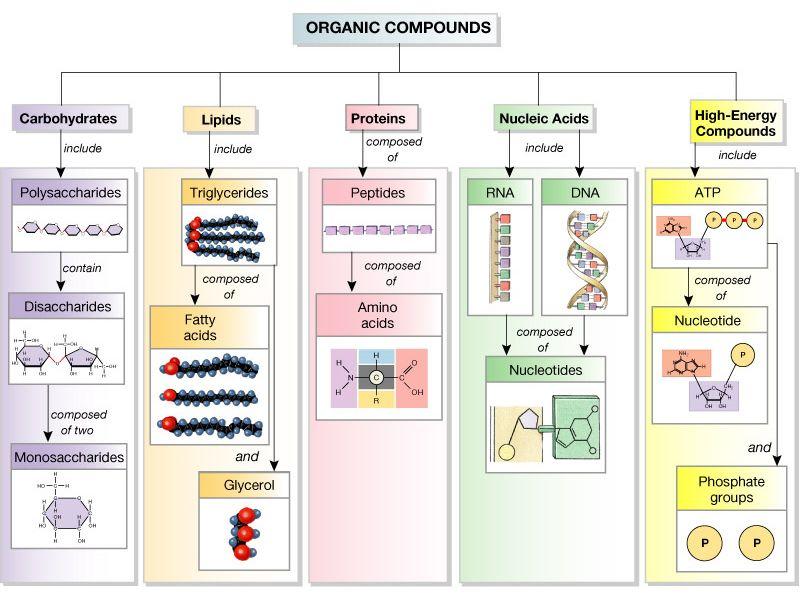 Easy to remember breakdown of carbohydrates lipids fat and – Macromolecule Worksheet