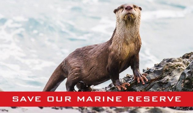 Garden Route residents petition for the Tsitsikamma Marine Protected Area to keep its status.