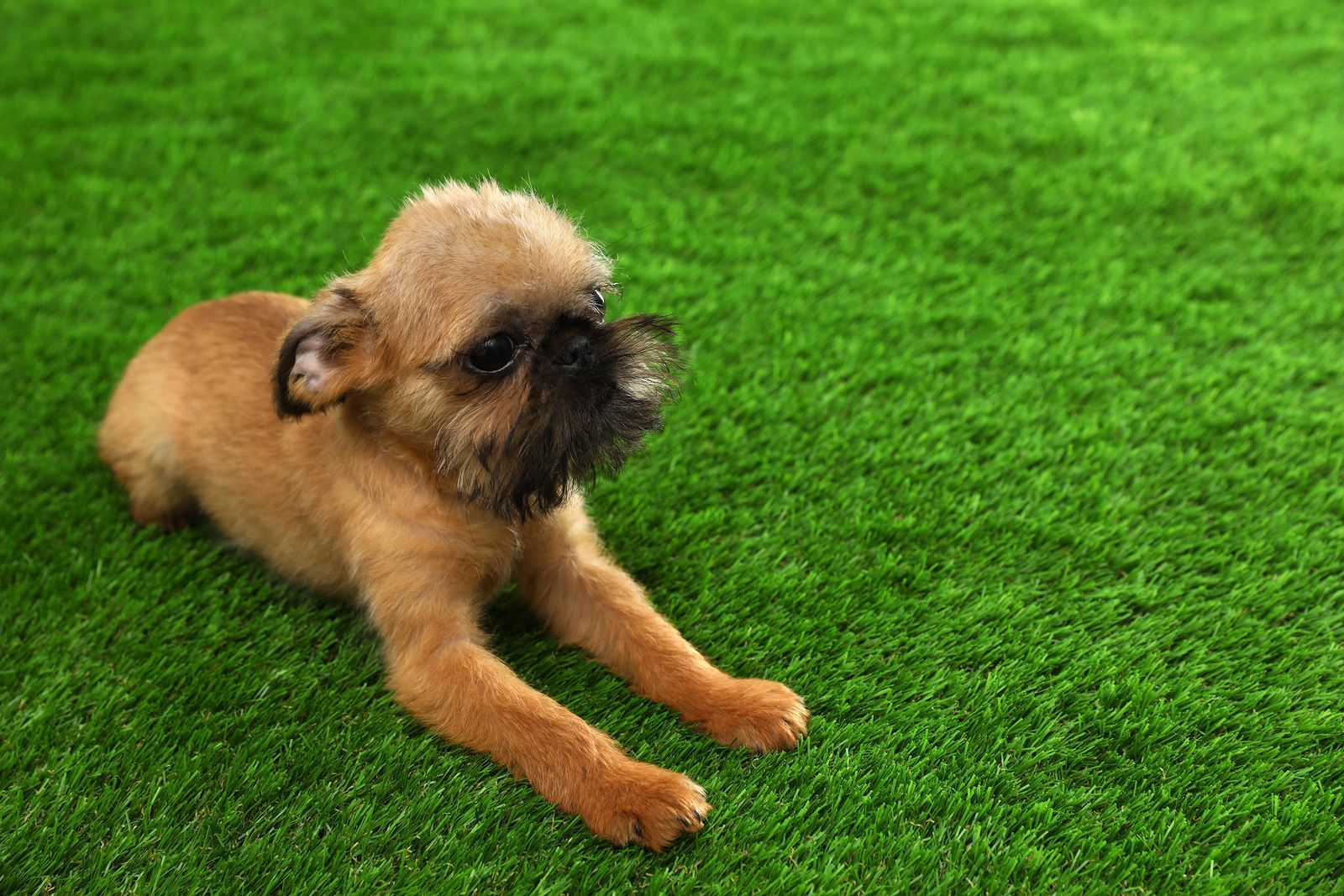 4 fun pet games to enjoy in your artificial grass