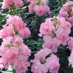Pin on Garden varietals