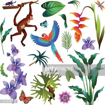A Vector Illustration Of Various Tropical Amazon Rainforest Plants