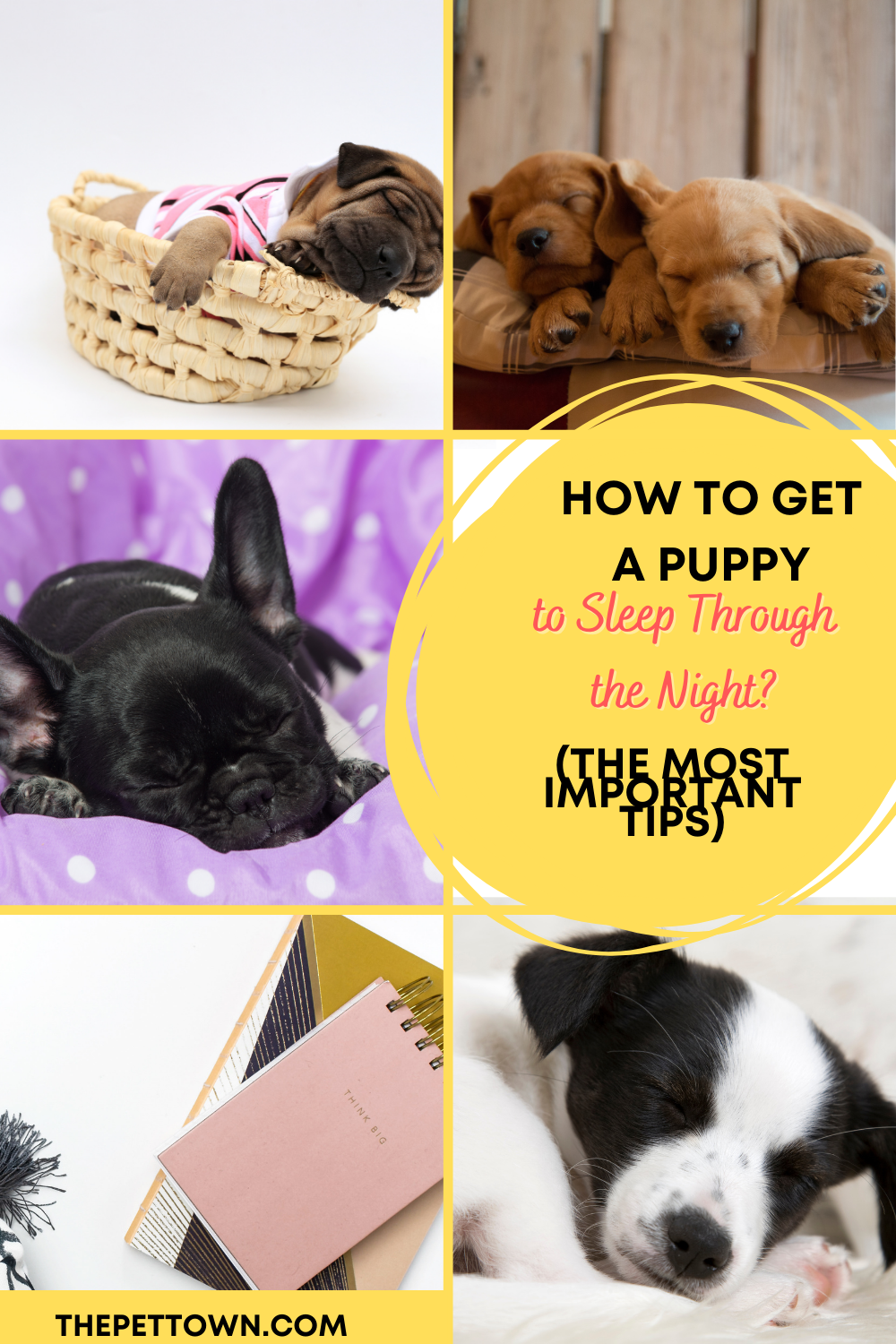 How To Get A Puppy To Go To Sleep Puppy Whining At Night Getting A Puppy Sleeping Puppies