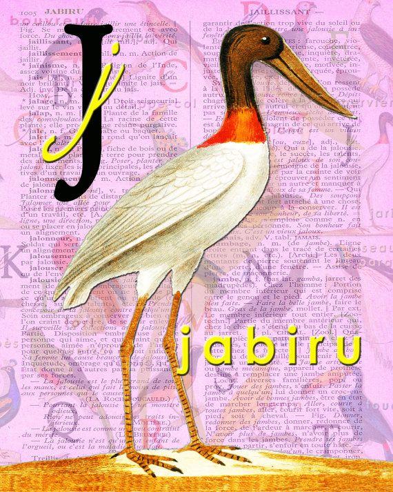 J for JABIRU.Alphabet Ornithology art Decor par BerniesArtPrints