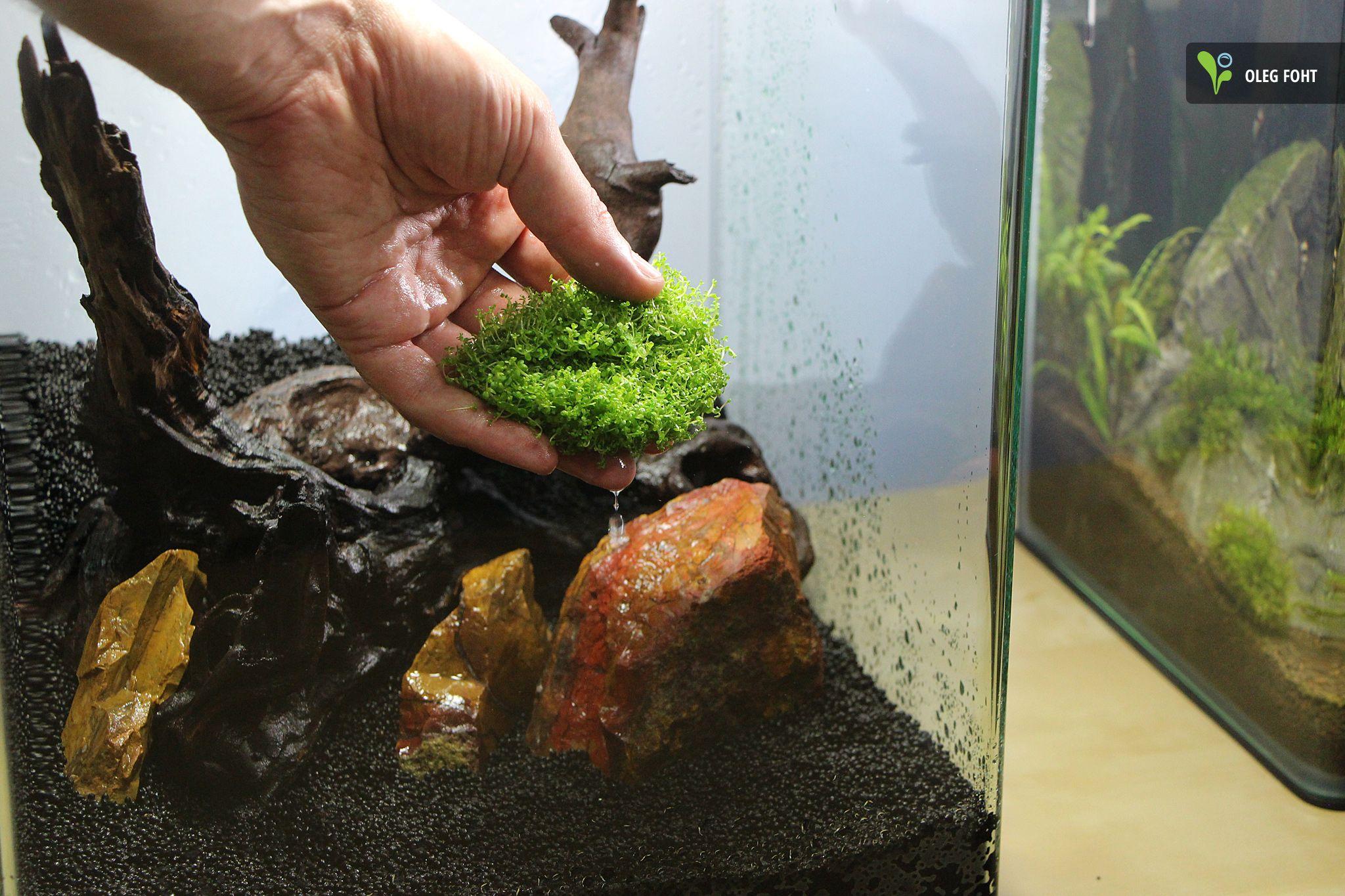 work in progress 30l nano aquarium hemianthus. Black Bedroom Furniture Sets. Home Design Ideas