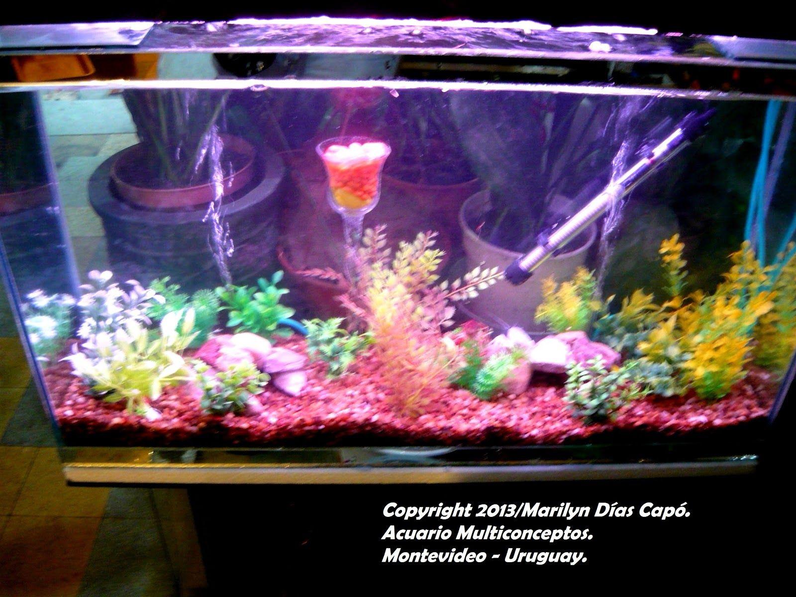 Peces tropicales de agua dulce mi primer acuario c mo for Lista de peces tropicales para acuarios