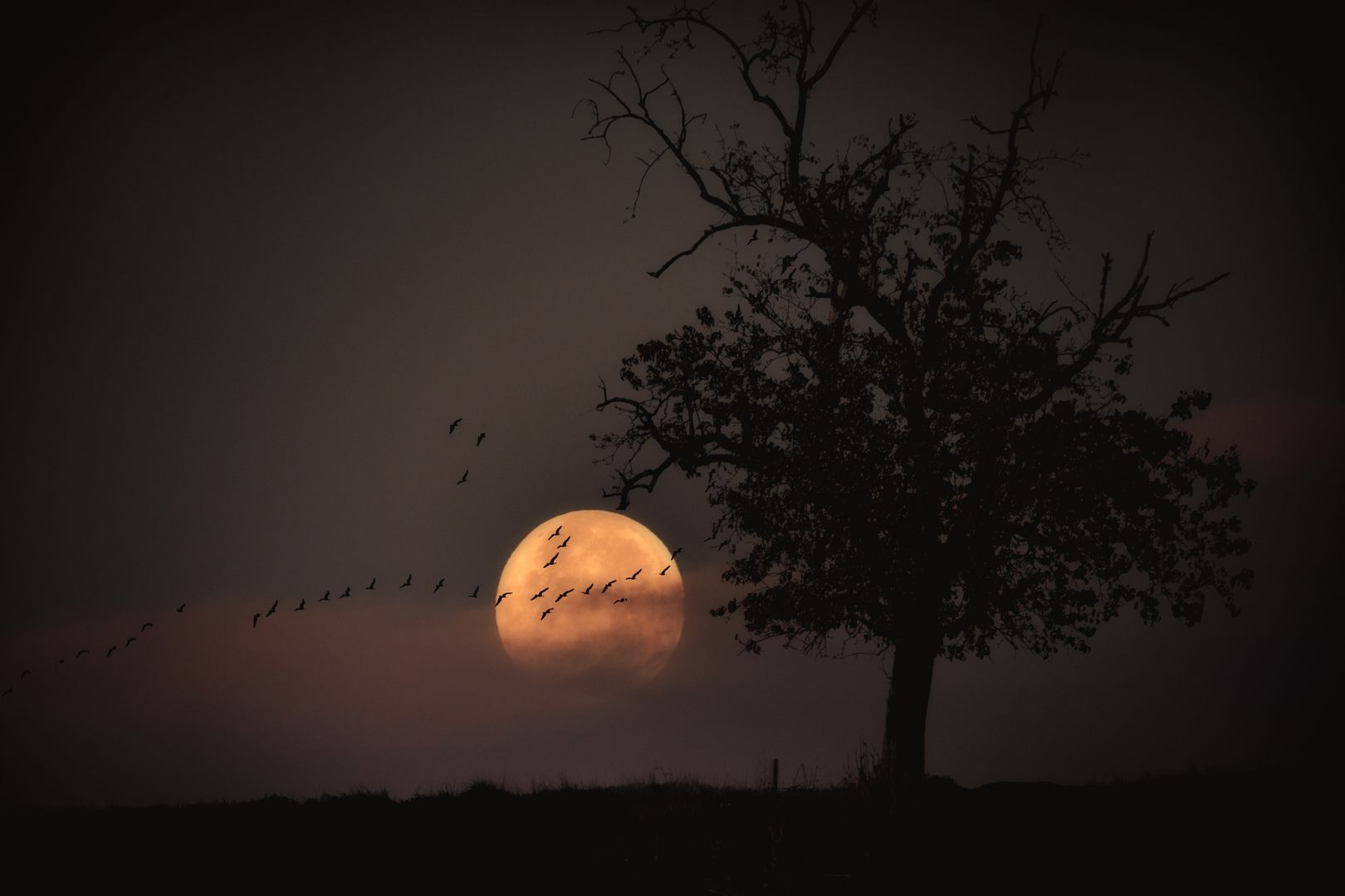 Voller toller Mond ...