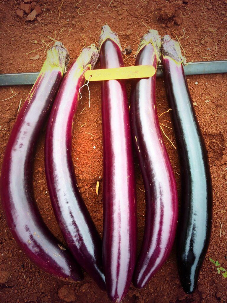 April 2014 eggplant vegetables food