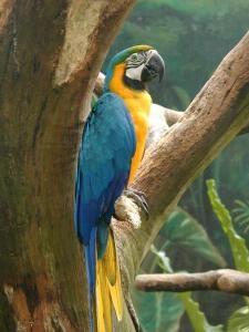 Selva tropical - Wikipedia, la enciclopedia libre