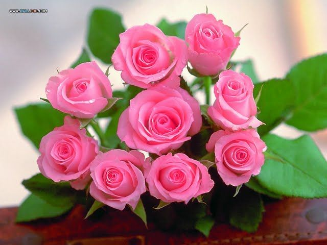 Romantic Pink Roses For Sweet Heart Wallpaper