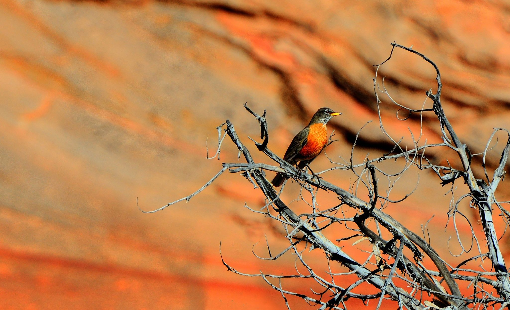 A birdie chirping somewhere in Zion National Park.