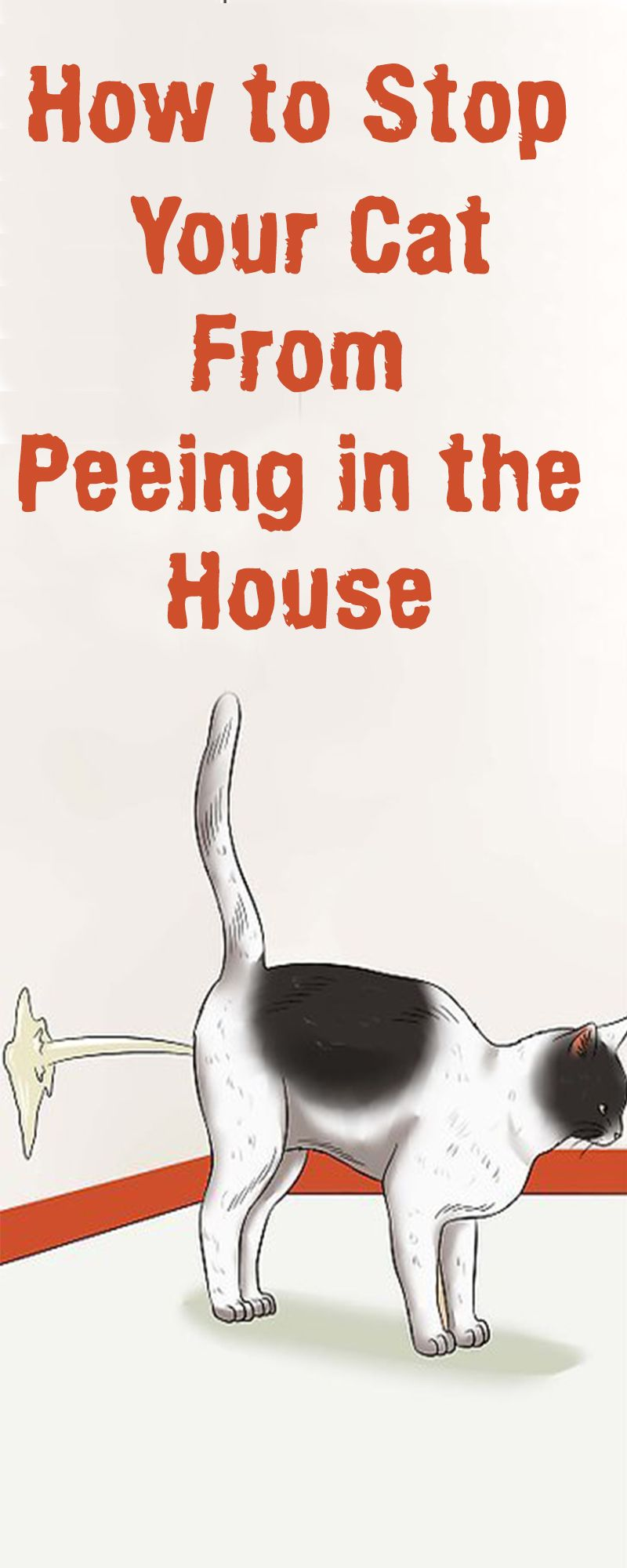 How to stop your cat from peeing in the house stop cats