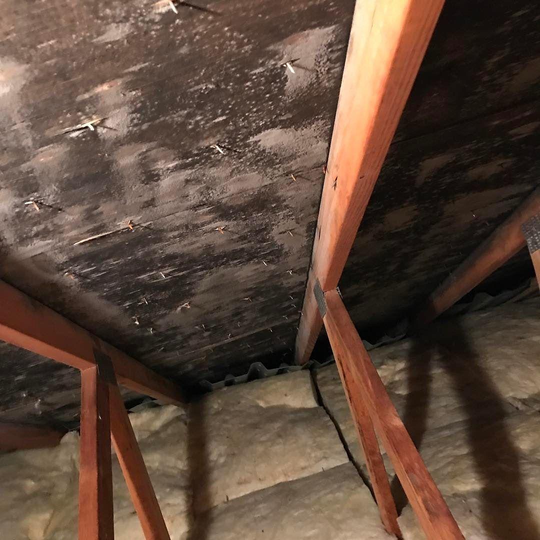 Black attic mold syracuseny onondaga moldremoval moldtesting asbestos mold removal syracuse ny environmental consultant syracuse environmental construction group solutioingenieria Images