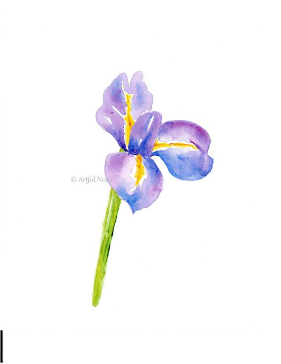 616afcd32 Iris print, Birth month flower art with personalized birth stats, June birth  art, birth announcement art.