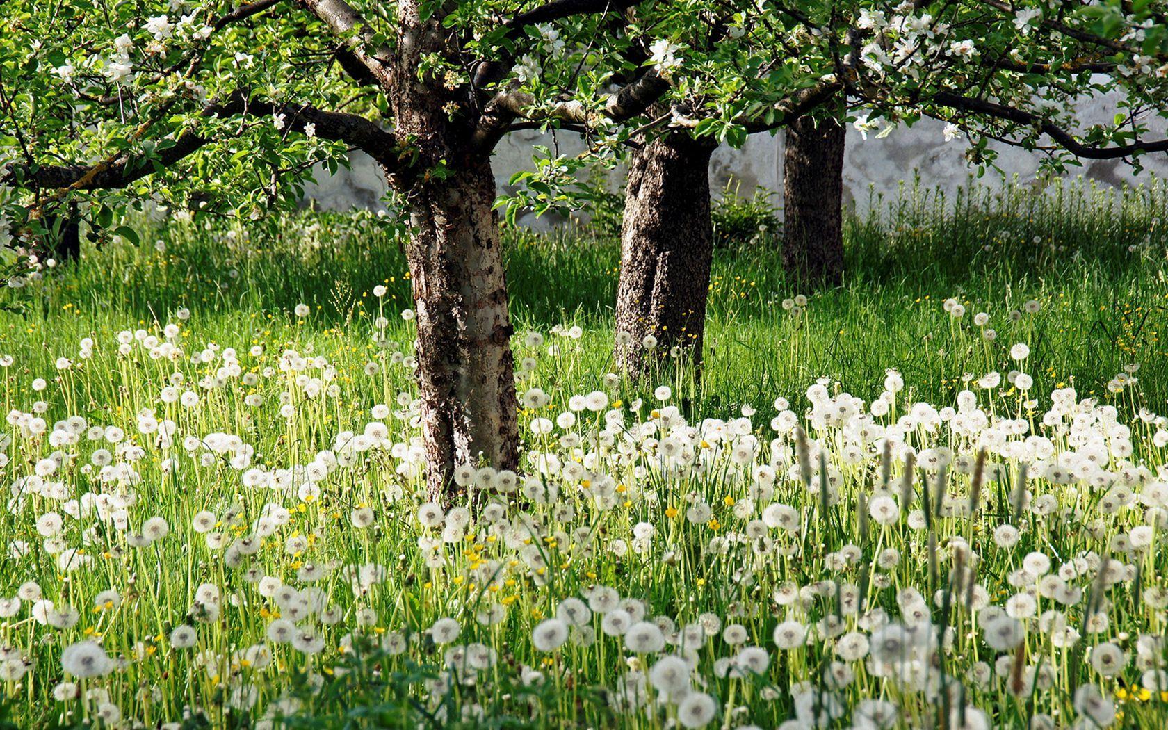 25+ Awesome White Garden Ideas With White Flower