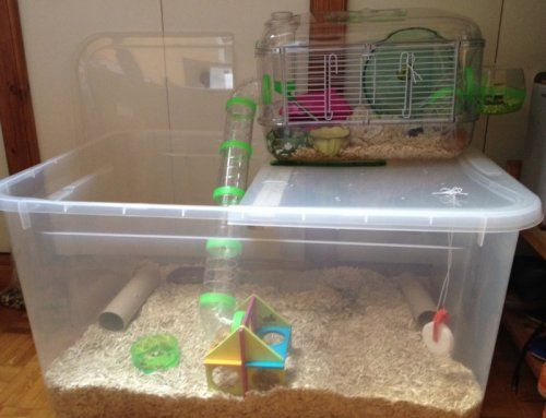 Une Bin Page Hamster Toys Hamster Cages Hamster Diy Cage
