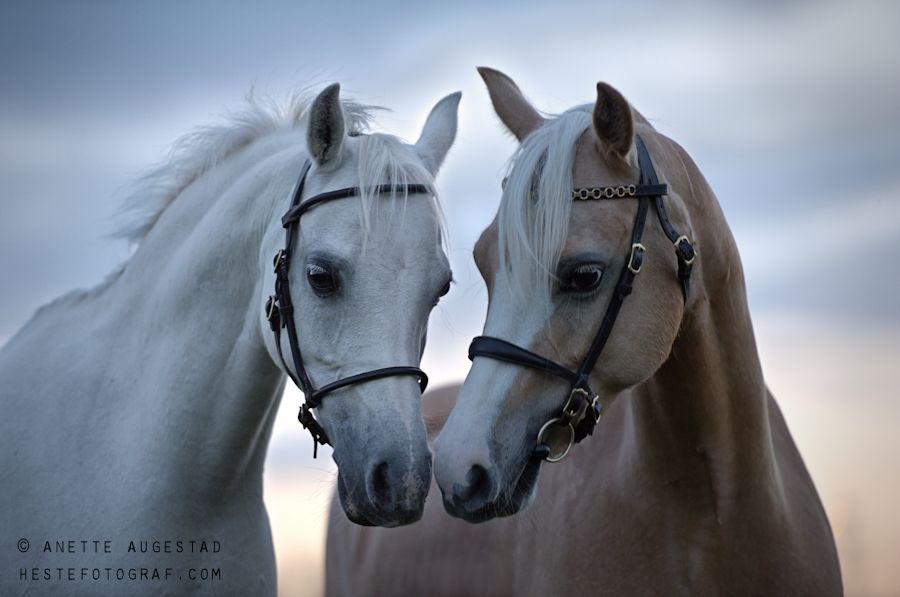 Beautiful Ponies by A-Motive.deviantart.com on @DeviantArt