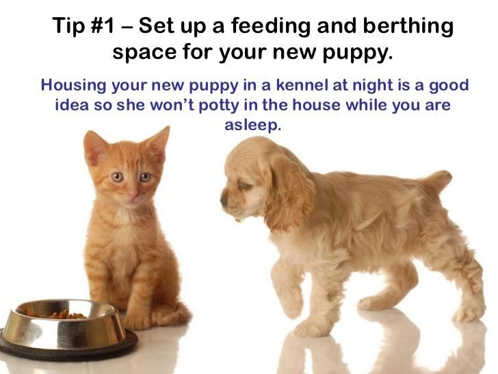 Puppy Care Tips From Petland Novi Food Animals Pets Tabby Kitten Orange