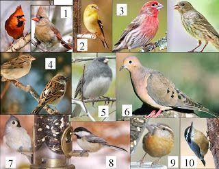 Mi Winter Birds Wild Birds Unlimited Wild Birds Animals Wild