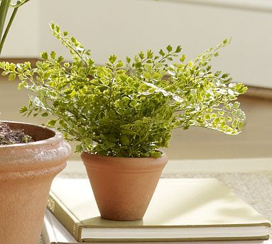 Faux Potted Maidenhair Fern #potterybarn. On sale for $14.99!