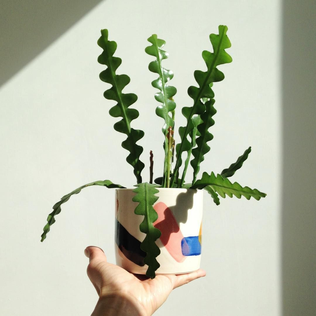 Pin On Houseplant Wishlist