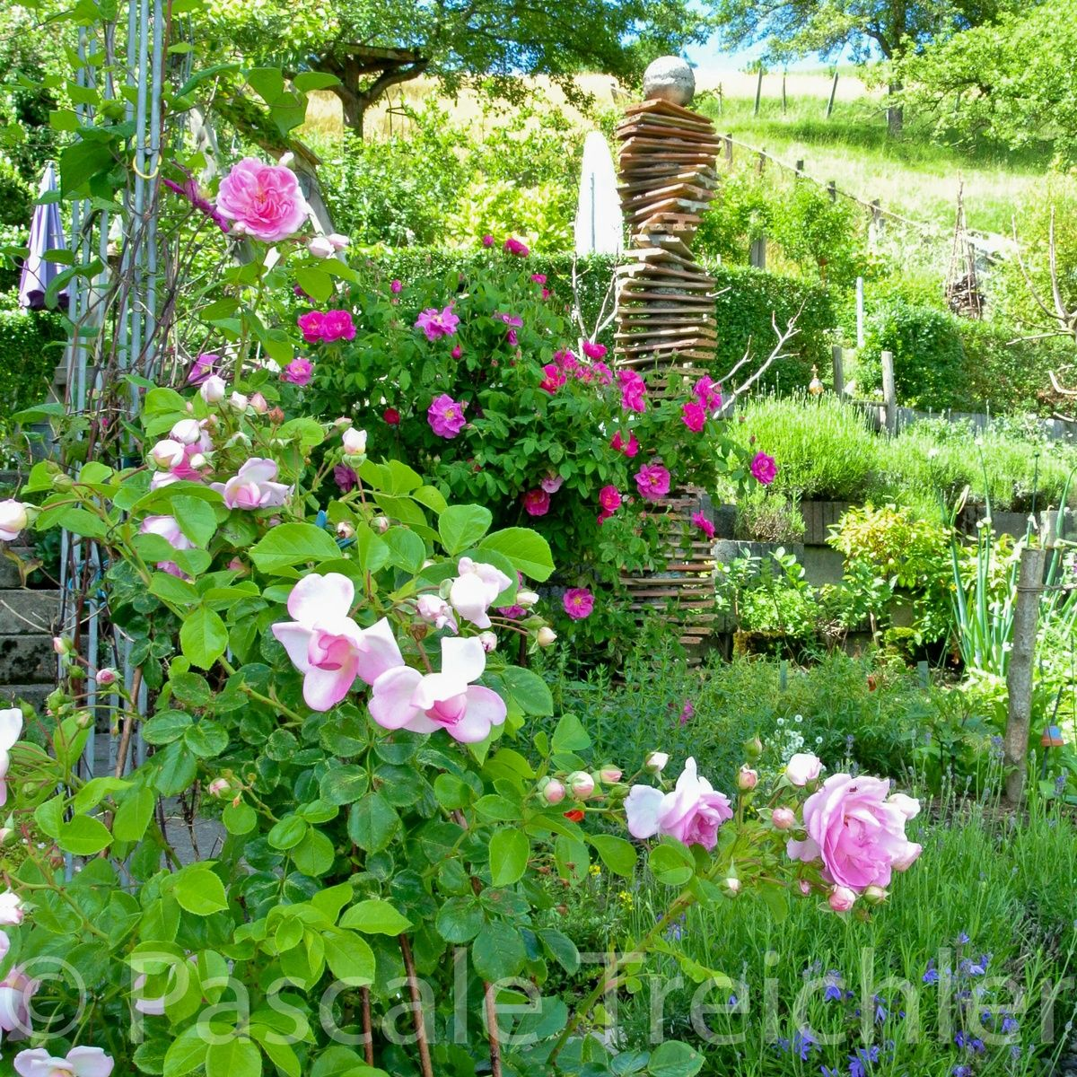Liebst Du Deinen Garten, Aber Nicht Die Gartenarbeit? Dann Solltest Du  Einen Pflegeleichten Garten Anlegen, Der Trotzdem Wild Und Romantisch Ist.