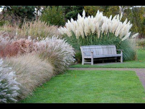 Trawy Ozdobne Przedstawia Leroy Merlin Grasses Landscaping Grasses Garden Backyard Landscaping