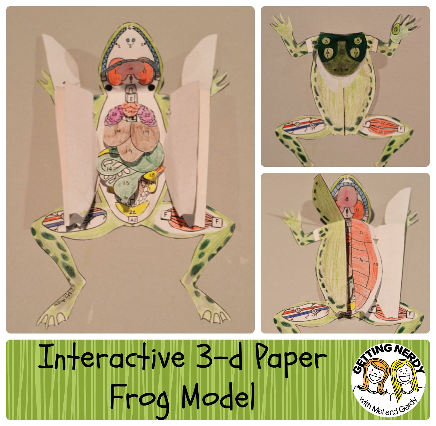 Frog dissection worksheet elementary