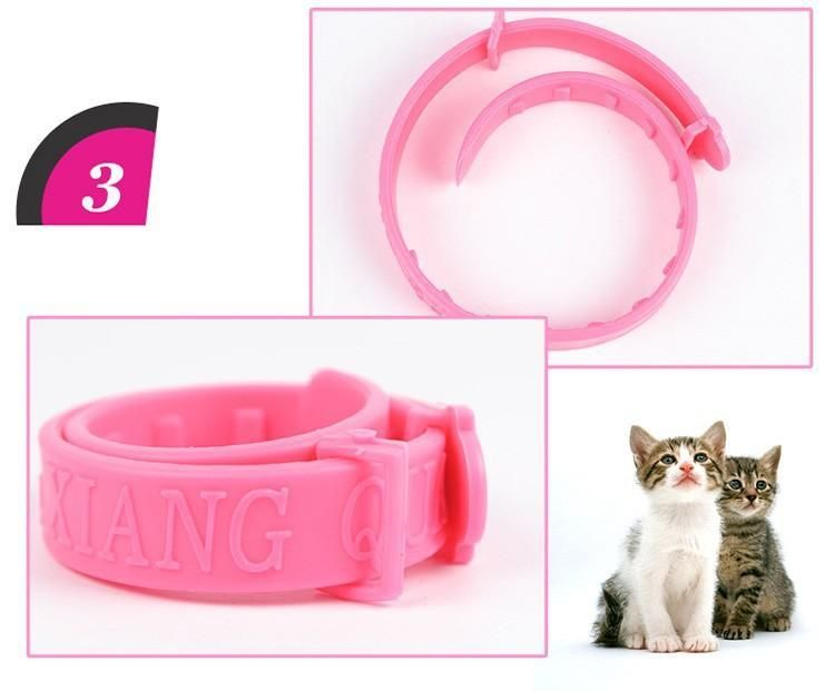 Anti Flea Collar Amp Ndash The Home Face Cat Fleas Angora Cats Kitten Collars