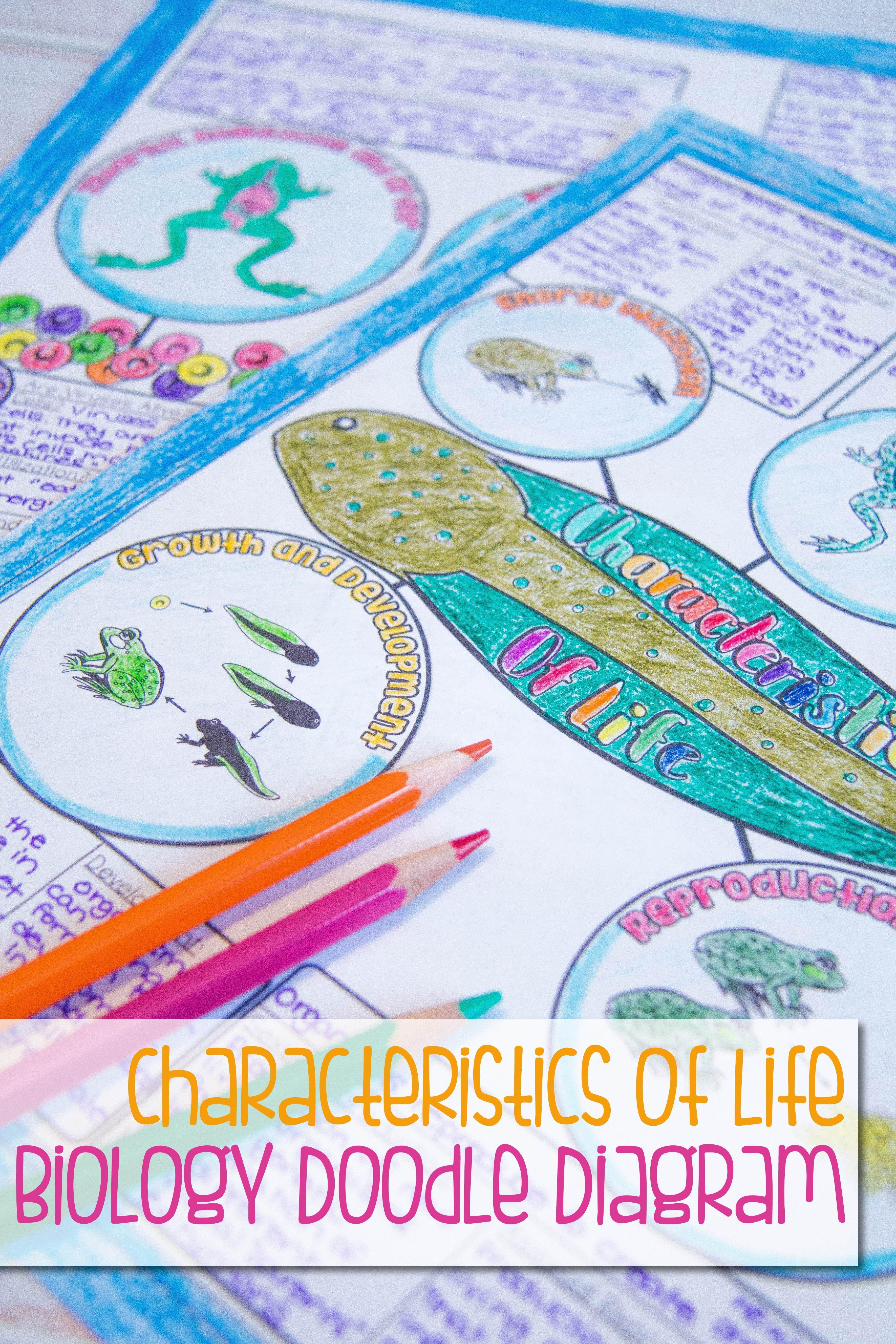 Characteristics Of Life Biology Doodle Diagram