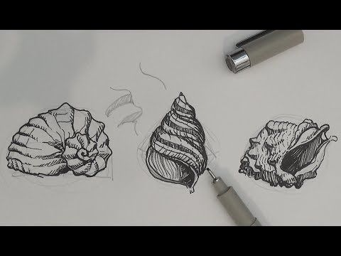 Single Weight Line Art Tutorial : Pen and ink drawing tutorials how to draw sea shells❤ share