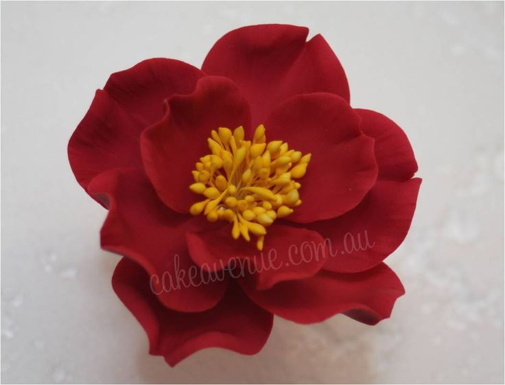 Red Camellia Gumpaste Camellia Gumpaste Roses Pinterest Sugar Flowers Tutorial Edible Cake Decorations Fondant Flowers