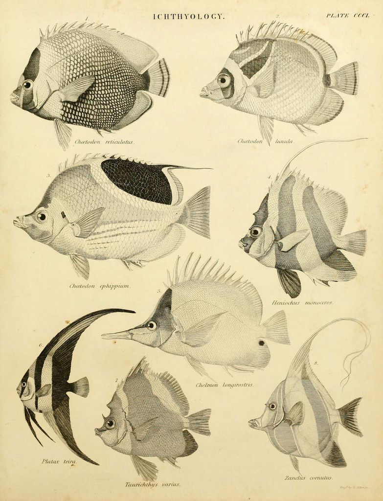 An introduction to the natural history of fishes