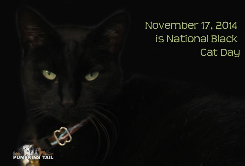 National Black Cat Day 17th November National Black Cat Day Black Cat Day Cat Day