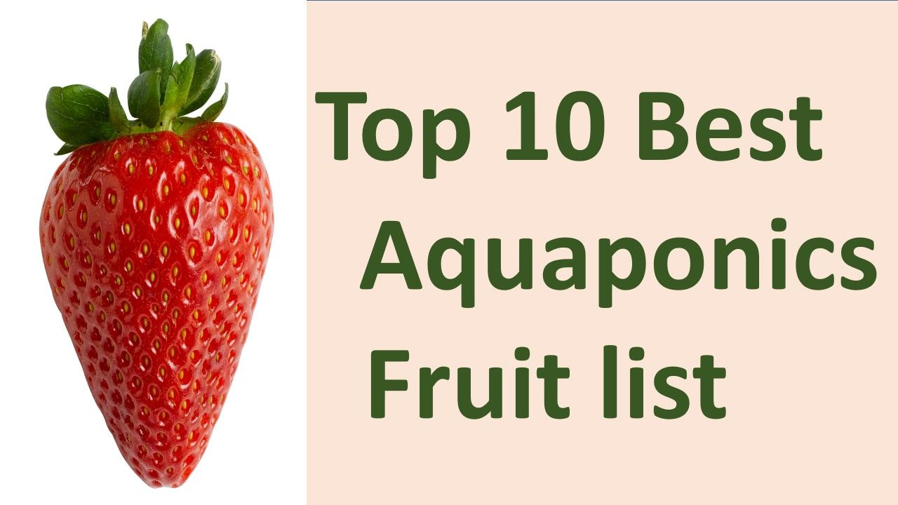 In Aquaponics Fruit List Strawberry Banana Pomegranate Orange Etc Are The Most Common There Are Also Many Fruits Yhat Y Fruit List Aquaponics System Aquaponics