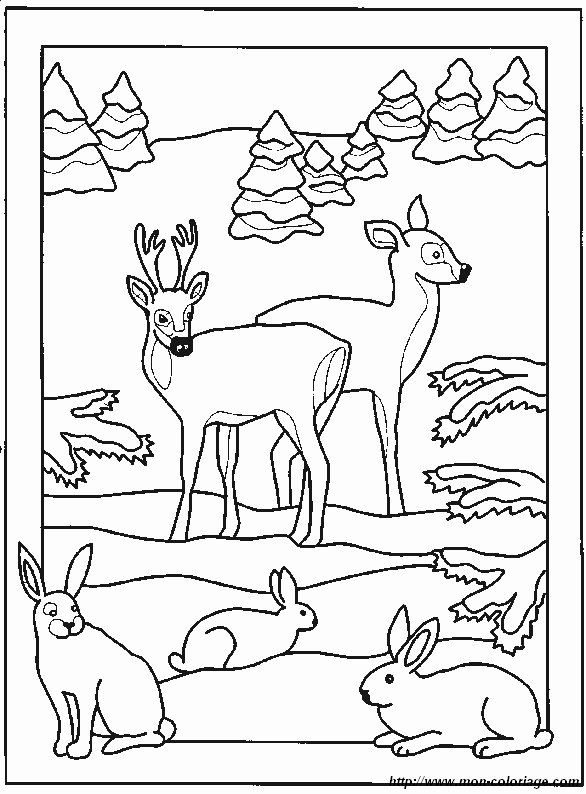 Malvorlagen Verschiedene Tiere Bild Hirsch 3 Ausmalbilder Tiere Tiere Zum Ausmalen Ausmalen